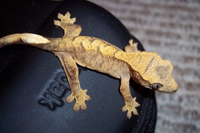 gecko13june19bbb
