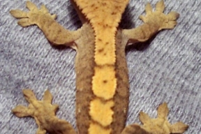 gecko18september24bb